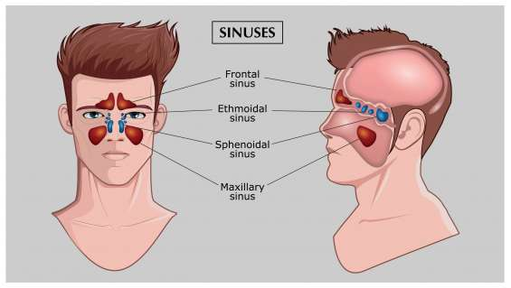 Endoscopic surgery for treating sinusitis