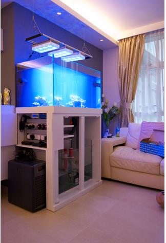 Best aquarium maintenance service provider